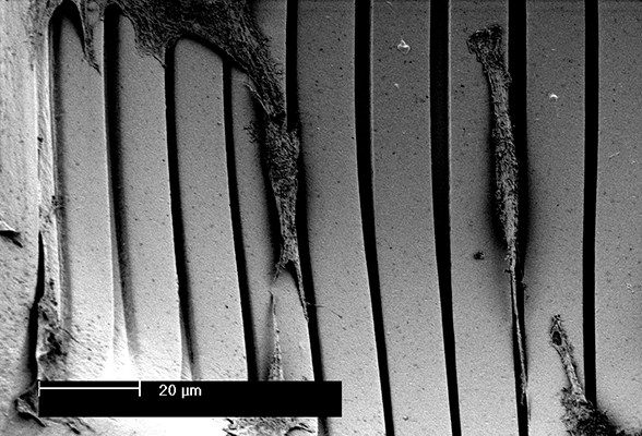 Section of an engineered artificial/synthetic cellular microenvironment in the form of a topographically defined hemispherical microwell from polylactic acid with myoblasts aligning to the microgrooves on the surface of the strongly curved microwell wall; scanning electron microscopy (SEM) image.